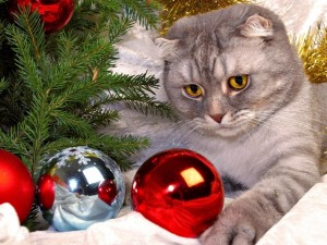 Cat and Christmas Decorations