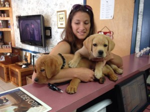 NBV 2 Lab pups