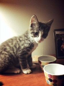 NBV Kitten drinking