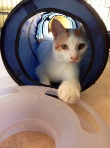 NBV cat in tube