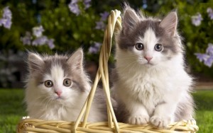 Kittens in a Basket - Copy - Copy