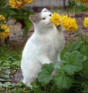cat veterinarian