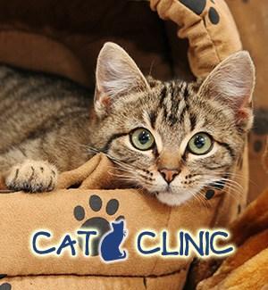 catclinic